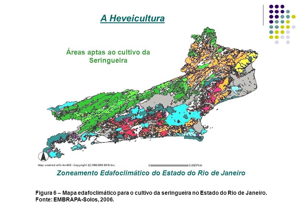 Zoneamento Edafoclimático do Estado do Rio de Janeiro Áreas aptas ao cultivo da Seringueira A Heveicultura Figura 6 – Mapa edafoclimático para o culti