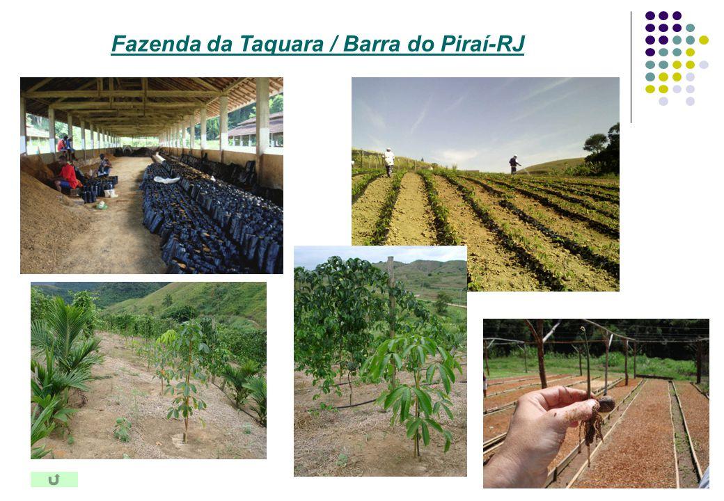 Fazenda da Taquara / Barra do Piraí-RJ