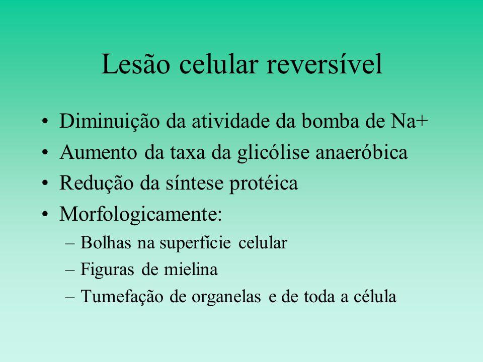 Lesão celular reversível Diminuição da atividade da bomba de Na+ Aumento da taxa da glicólise anaeróbica Redução da síntese protéica Morfologicamente: –Bolhas na superfície celular –Figuras de mielina –Tumefação de organelas e de toda a célula