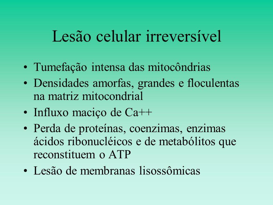 Lesão celular irreversível Tumefação intensa das mitocôndrias Densidades amorfas, grandes e floculentas na matriz mitocondrial Influxo maciço de Ca++ Perda de proteínas, coenzimas, enzimas ácidos ribonucléicos e de metabólitos que reconstituem o ATP Lesão de membranas lisossômicas