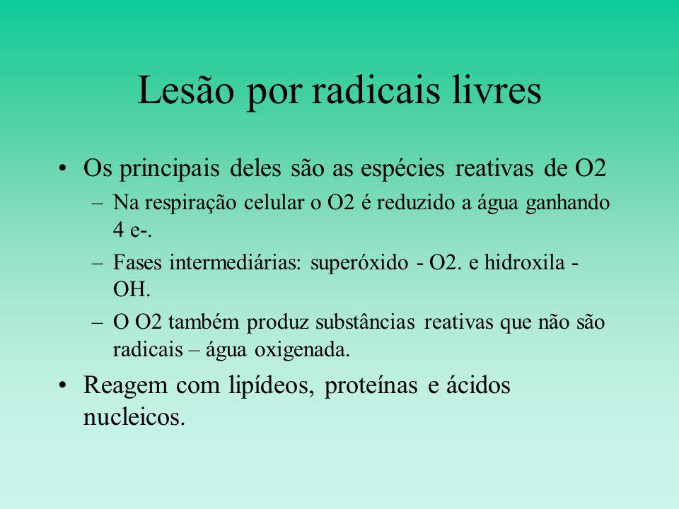 Lesão por radicais livres Os principais deles são as espécies reativas de O2 –Na respiração celular o O2 é reduzido a água ganhando 4 e-.