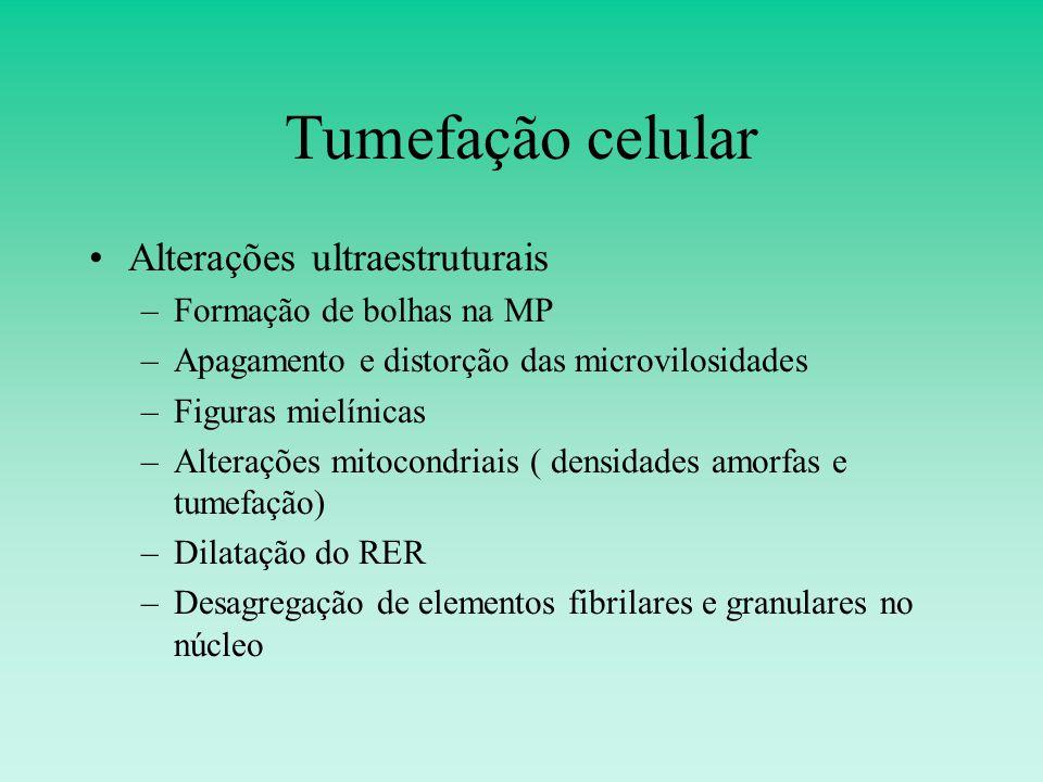 Tumefação celular Alterações ultraestruturais –Formação de bolhas na MP –Apagamento e distorção das microvilosidades –Figuras mielínicas –Alterações mitocondriais ( densidades amorfas e tumefação) –Dilatação do RER –Desagregação de elementos fibrilares e granulares no núcleo