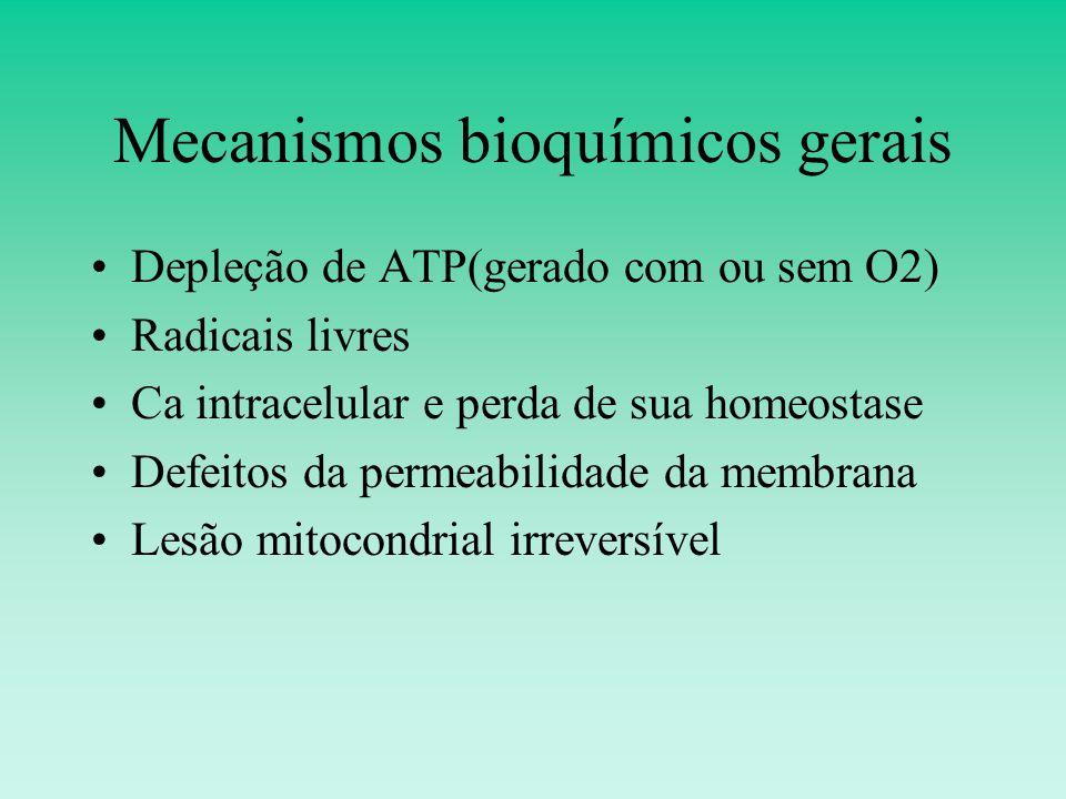 Mecanismos bioquímicos gerais Depleção de ATP(gerado com ou sem O2) Radicais livres Ca intracelular e perda de sua homeostase Defeitos da permeabilidade da membrana Lesão mitocondrial irreversível