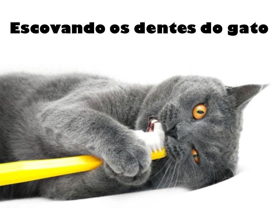 Escovando os dentes do gato