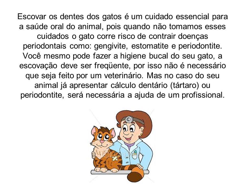 Escovar os dentes dos gatos é um cuidado essencial para a saúde oral do animal, pois quando não tomamos esses cuidados o gato corre risco de contrair