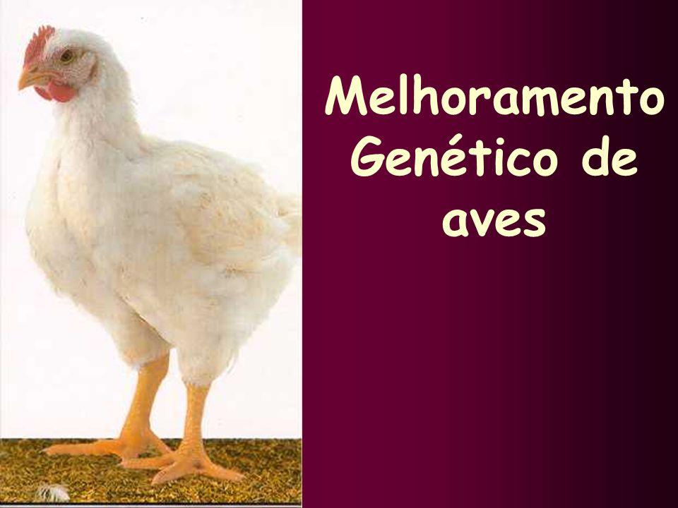 Melhoramento Genético de aves