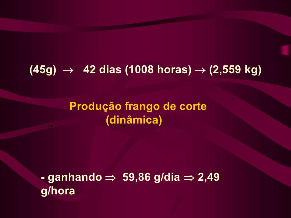 Produção frango de corte (dinâmica) (45g) 42 dias (1008 horas) (2,559 kg) - ganhando 59,86 g/dia 2,49 g/hora