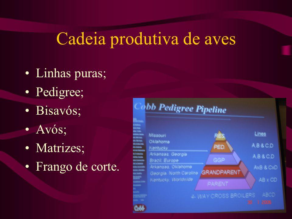 Cadeia produtiva de aves Linhas puras; Pedigree; Bisavós; Avós; Matrizes; Frango de corte.