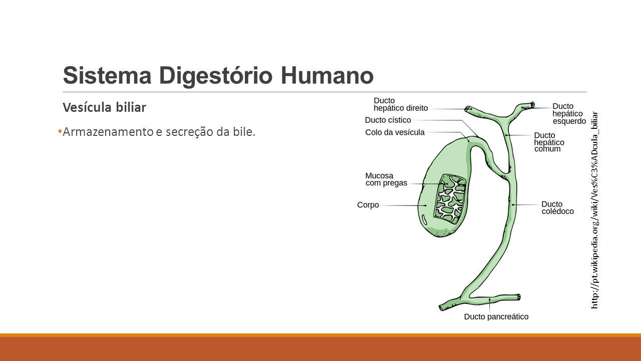 Sistema Digestório Humano Vesícula biliar Armazenamento e secreção da bile. http://pt.wikipedia.org/wiki/Ves%C3%ADcula_biliar