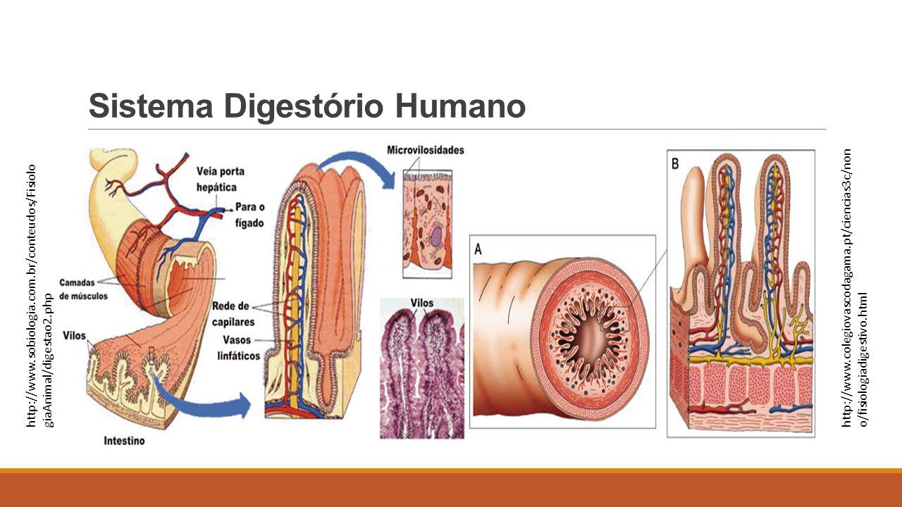 Sistema Digestório Humano http://www.sobiologia.com.br/conteudos/Fisiolo giaAnimal/digestao2.php http://www.colegiovascodagama.pt/ciencias3c/non o/fis