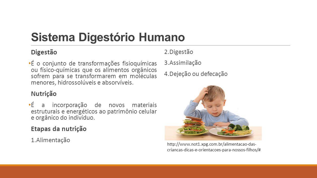 Sistema Digestório Humano Alimentos Água Sais minerais Vitaminas Glicídios ou carboidratos Lipídios Proteínas Ácidos nucleicos http://www.sonutricao.com.br/conteudo/alimentacao/