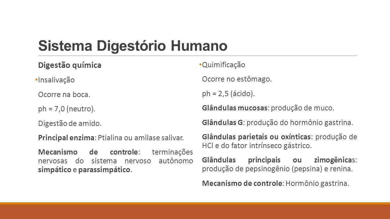 Sistema Digestório Humano Digestão química Insalivação Ocorre na boca. ph = 7,0 (neutro). Digestão de amido. Principal enzima: Ptialina ou amilase sal