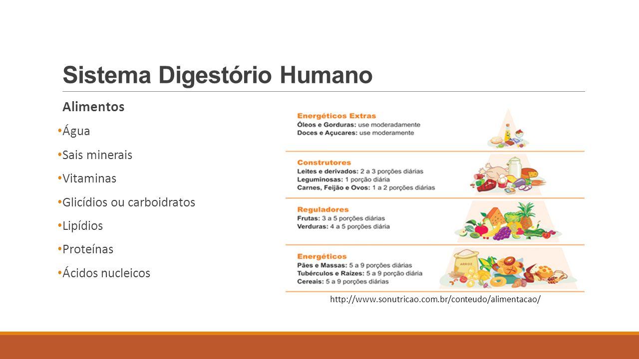 Sistema Digestório Humano Alimentos Água Sais minerais Vitaminas Glicídios ou carboidratos Lipídios Proteínas Ácidos nucleicos http://www.sonutricao.c