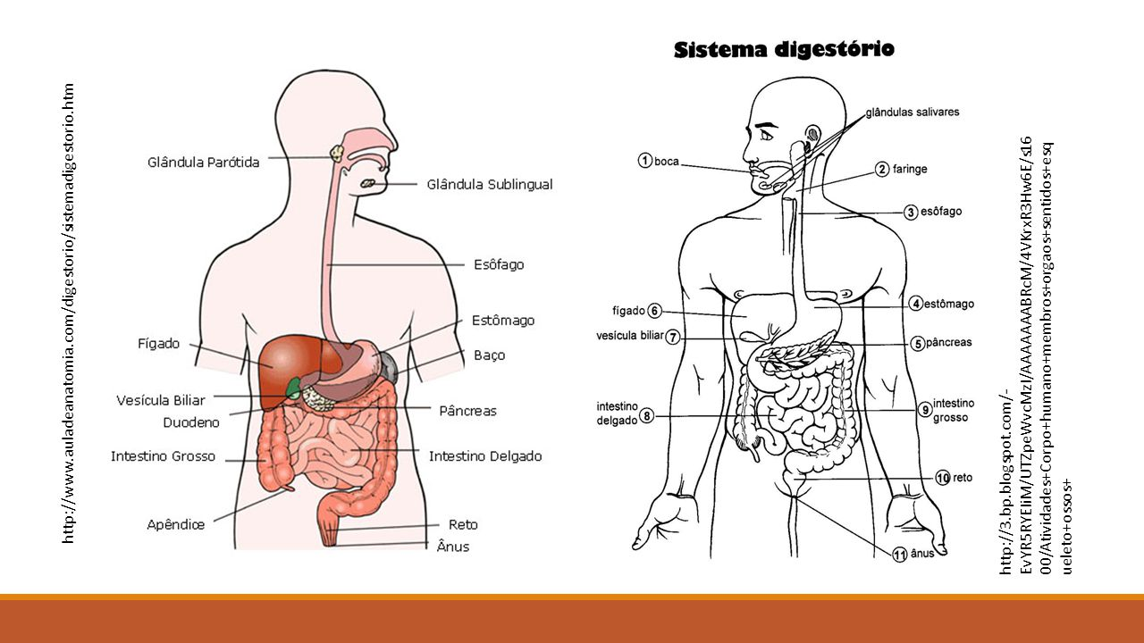 http://3.bp.blogspot.com/- EvYR5RYEIiM/UTZpeWvcMzI/AAAAAAABRcM/4VKrxR3Hw6E/s16 00/Atividades+Corpo+humano+membros+orgaos+sentidos+esq ueleto+ossos+ ht