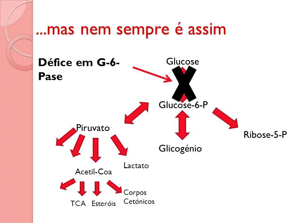 ...mas nem sempre é assim Glucose Glucose-6-P Piruvato Glicogénio Ribose-5-P Acetil-Coa Lactato TCA Corpos Cetónicos Esteróis Défice em G-6- Pase