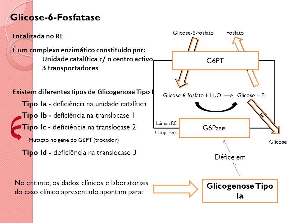 Glicose-6-Fosfatase Localizada no RE É um complexo enzimático constituído por: Unidade catalítica c/ o centro activo 3 transportadores Existem diferentes tipos de Glicogenose Tipo I Tipo Ia - deficiência na unidade catalítica Tipo Ib - deficiência na translocase 1 Tipo Ic - deficiência na translocase 2 Mutação no gene do G6PT (trocador) Tipo Id - deficiência na translocase 3 No entanto, os dados clínicos e laboratoriais do caso clínico apresentado apontam para: Glicogenose Tipo Ia Défice em G6PT Glicose-6-fosfatoFosfato Glicose-6-fosfato + H O Glicose + Pi Glicose Lúmen RE Citoplasma T T T G6Pase G6PT