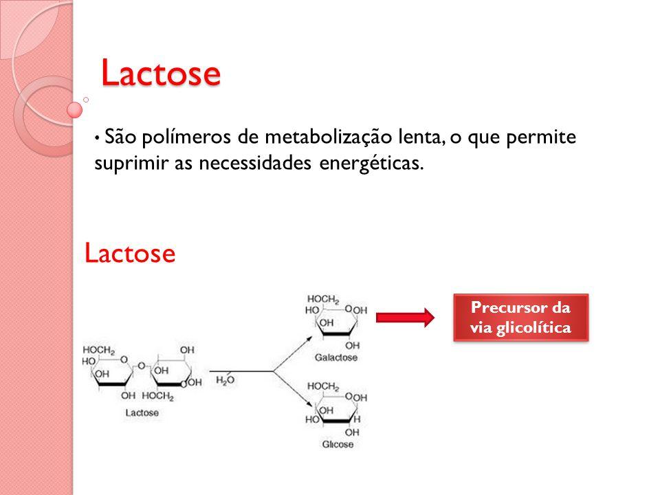São polímeros de metabolização lenta, o que permite suprimir as necessidades energéticas.