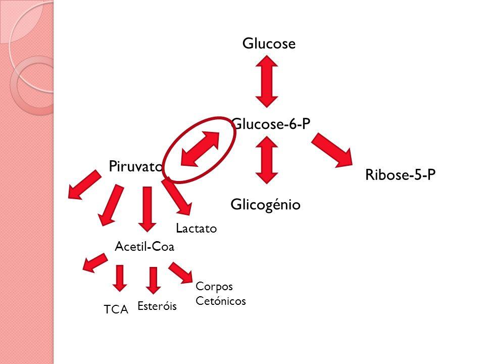 Glucose Glucose-6-P Piruvato Glicogénio Ribose-5-P Acetil-Coa Lactato TCA Corpos Cetónicos Esteróis