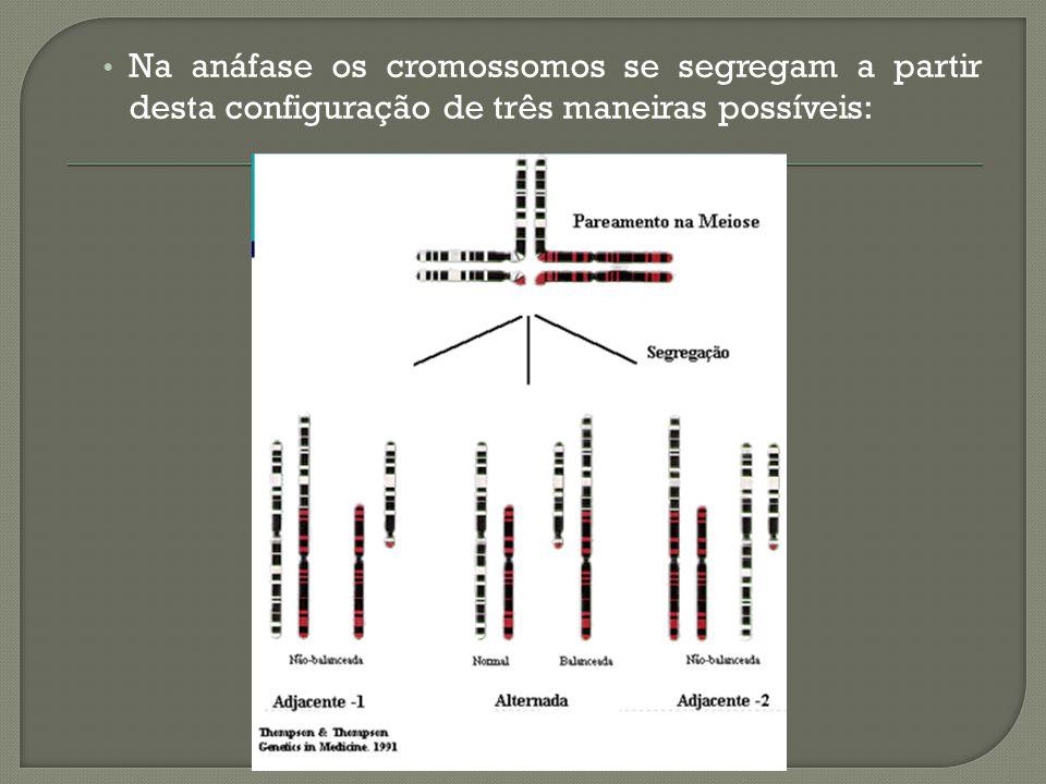 Na anáfase os cromossomos se segregam a partir desta configuração de três maneiras possíveis:
