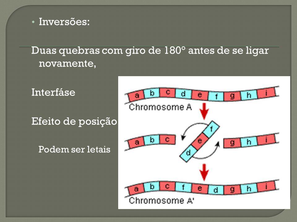 Inversões: Duas quebras com giro de 180° antes de se ligar novamente, Interfáse Efeito de posição Podem ser letais