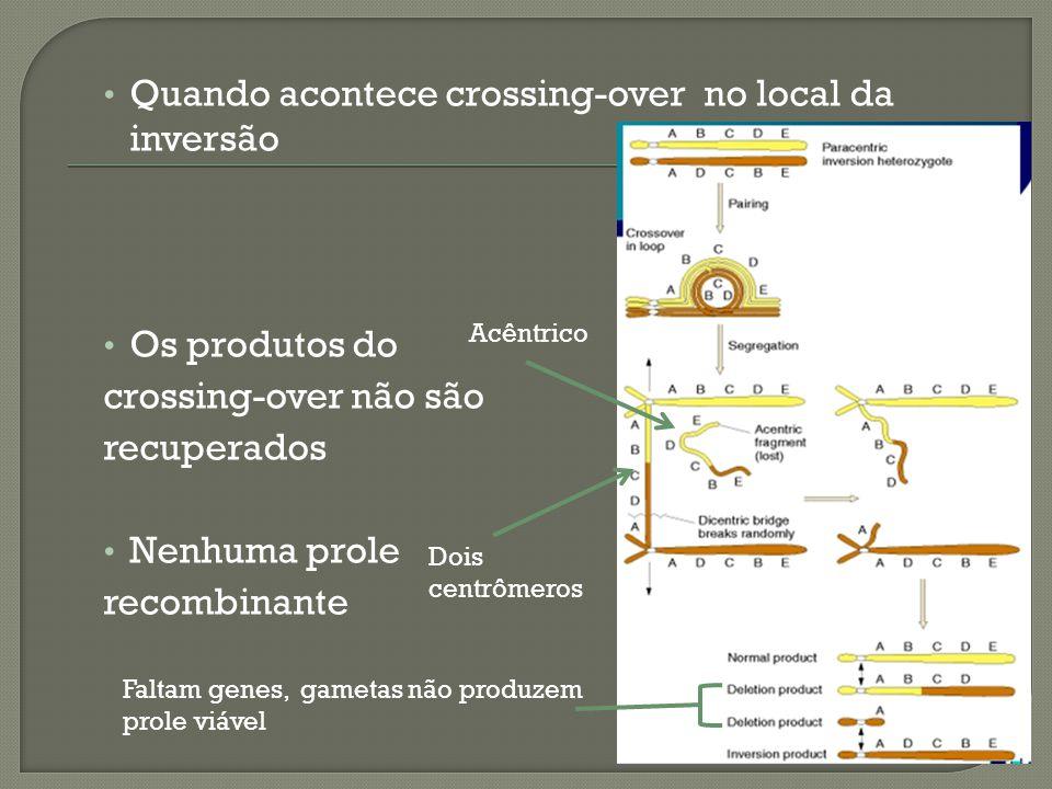 Quando acontece crossing-over no local da inversão Os produtos do crossing-over não são recuperados Nenhuma prole recombinante Dois centrômeros Acêntrico Faltam genes, gametas não produzem prole viável