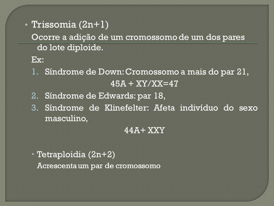 Trissomia (2n+1) Ocorre a adição de um cromossomo de um dos pares do lote diploide. Ex: 1.Síndrome de Down: Cromossomo a mais do par 21, 45A + XY/XX=4
