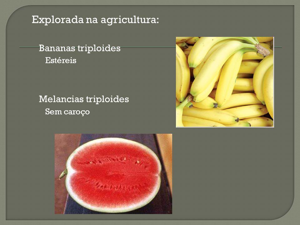 Explorada na agricultura: Bananas triploides Estéreis Melancias triploides Sem caroço
