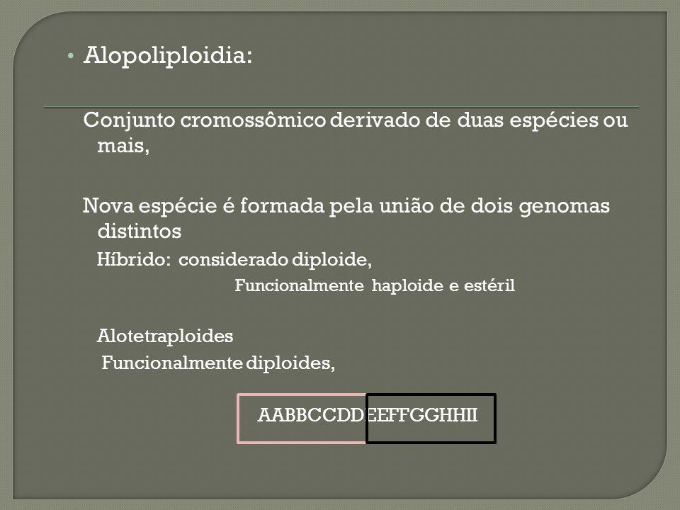 Alopoliploidia: Conjunto cromossômico derivado de duas espécies ou mais, Nova espécie é formada pela união de dois genomas distintos Híbrido: considerado diploide, Funcionalmente haploide e estéril Alotetraploides Funcionalmente diploides, AABBCCDDEEFFGGHHII