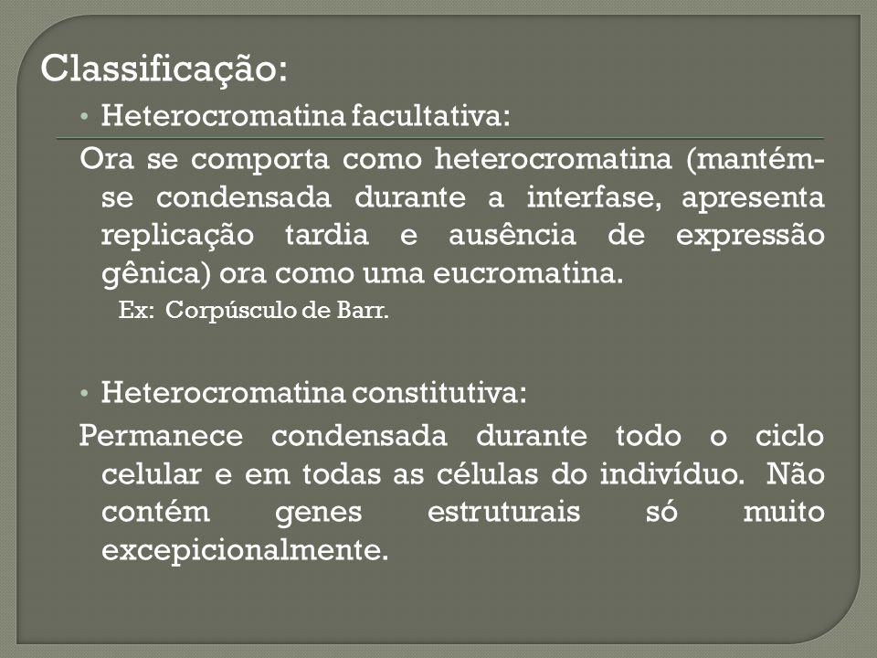 Classificação: Heterocromatina facultativa: Ora se comporta como heterocromatina (mantém- se condensada durante a interfase, apresenta replicação tardia e ausência de expressão gênica) ora como uma eucromatina.