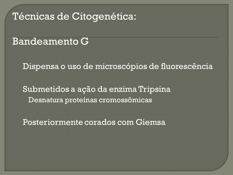 Técnicas de Citogenética: Bandeamento G Dispensa o uso de microscópios de fluorescência Submetidos a ação da enzima Tripsina Desnatura proteínas cromo