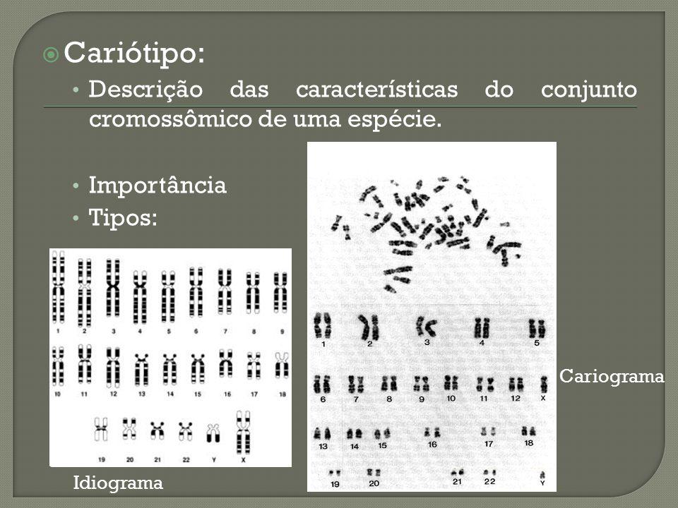 Cariótipo: Descrição das características do conjunto cromossômico de uma espécie. Importância Tipos: Idiograma Cariograma