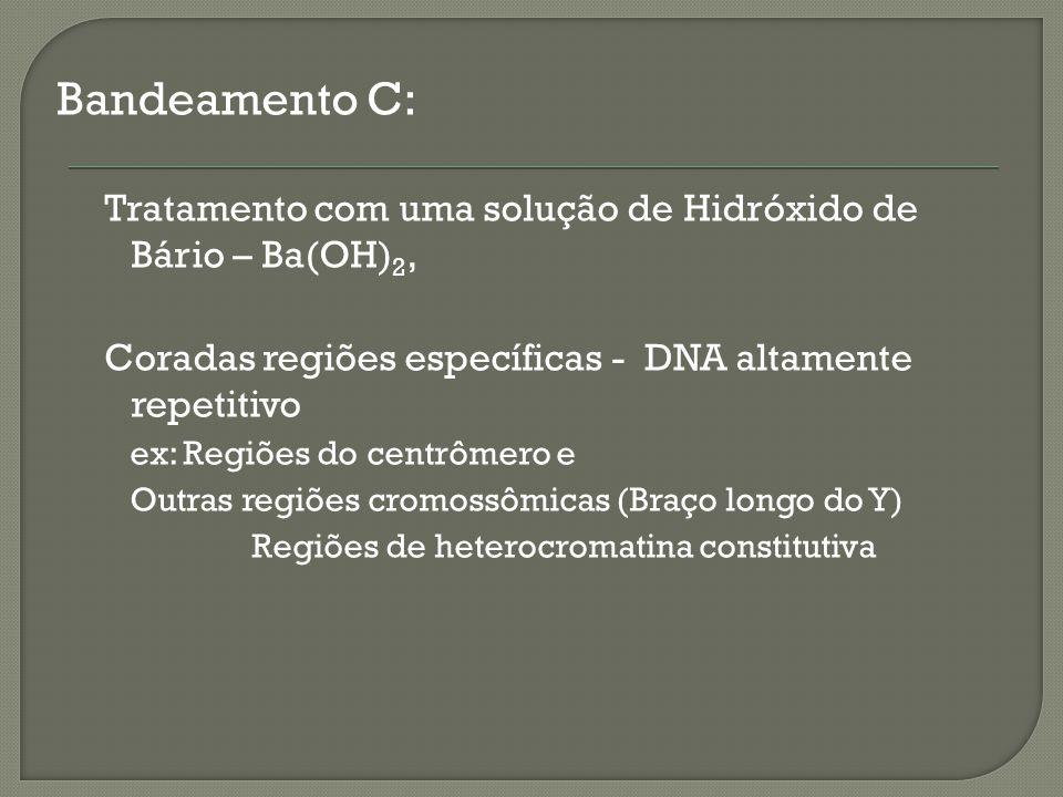 Bandeamento C: Tratamento com uma solução de Hidróxido de Bário – Ba(OH) 2, Coradas regiões específicas - DNA altamente repetitivo ex: Regiões do centrômero e Outras regiões cromossômicas (Braço longo do Y) Regiões de heterocromatina constitutiva