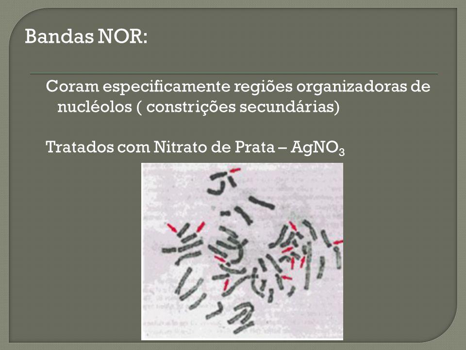 Bandas NOR: Coram especificamente regiões organizadoras de nucléolos ( constrições secundárias) Tratados com Nitrato de Prata – AgNO 3