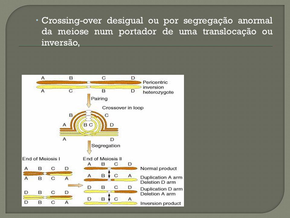 Cromossomo em Anel: São raros, Encontram dificuldade na mitose quando as duas cromátides irmãs tentam se separar na anáfase.