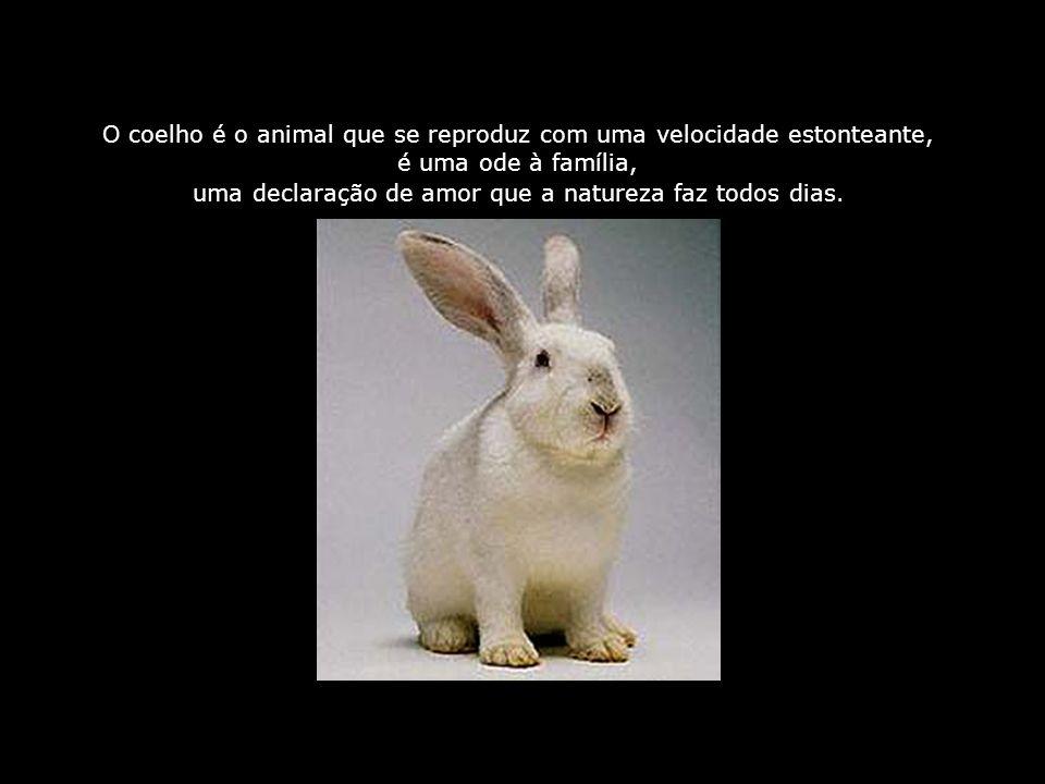 O coelho é o animal que se reproduz com uma velocidade estonteante, é uma ode à família, uma declaração de amor que a natureza faz todos dias.