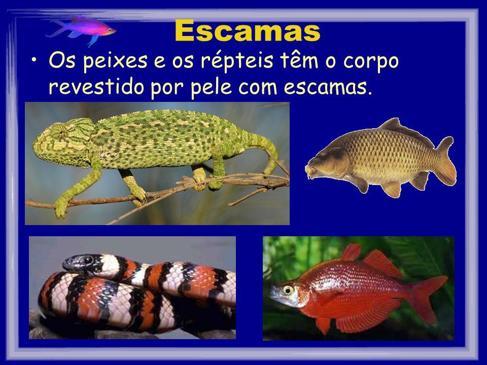 Escamas Os peixes e os répteis têm o corpo revestido por pele com escamas.