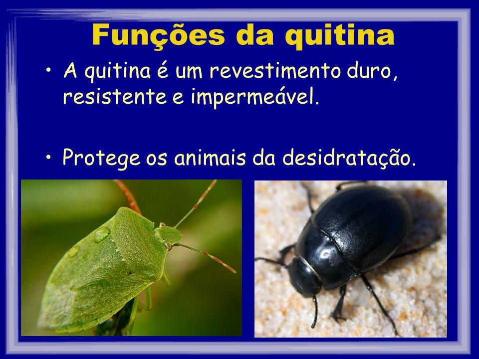 Funções da quitina A quitina é um revestimento duro, resistente e impermeável. Protege os animais da desidratação.