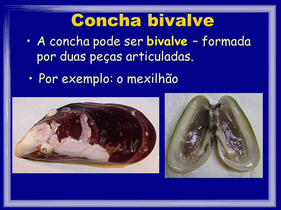 Concha bivalve A concha pode ser bivalve – formada por duas peças articuladas. Por exemplo: o mexilhão