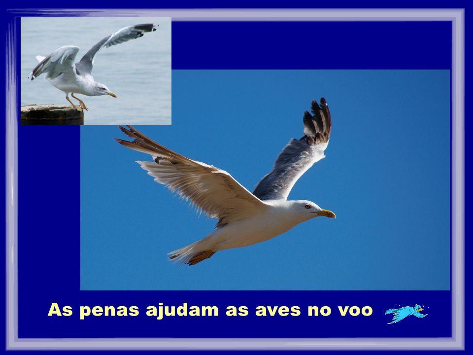 As penas ajudam as aves no voo