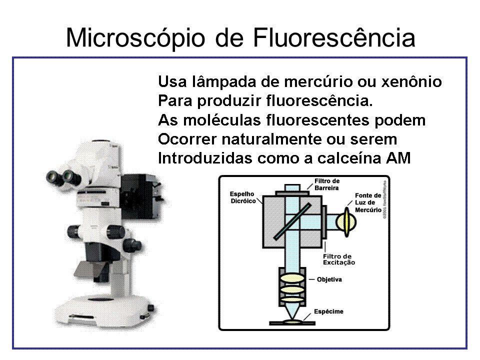 Microscópio de Fluorescência