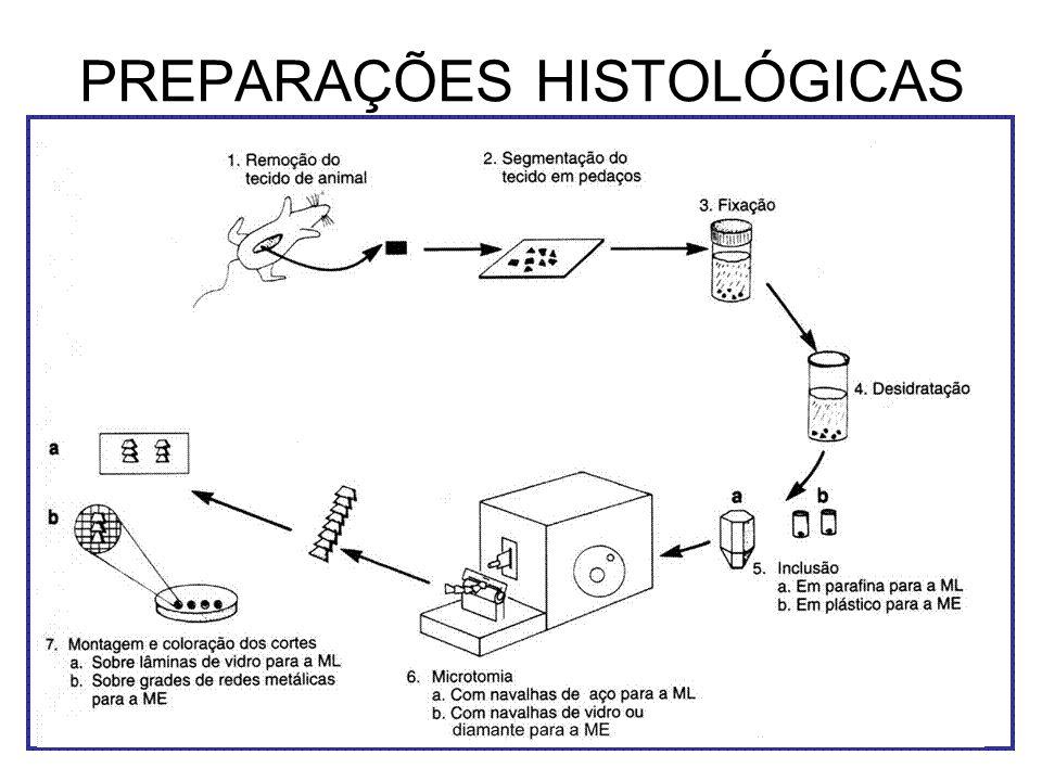 PREPARAÇÕES HISTOLÓGICAS