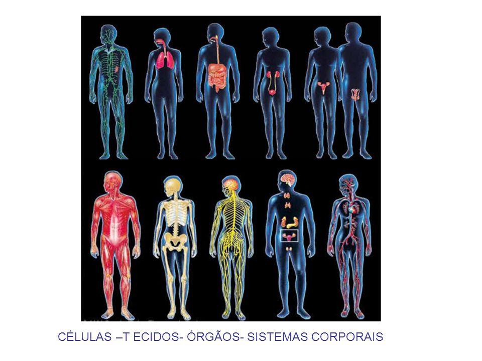CÉLULAS –T ECIDOS- ÓRGÃOS- SISTEMAS CORPORAIS
