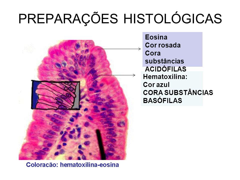 PREPARAÇÕES HISTOLÓGICAS Hematoxilina: Cor azul CORA SUBSTÂNCIAS BASÓFILAS Eosina Cor rosada Cora substâncias ACIDÓFILAS