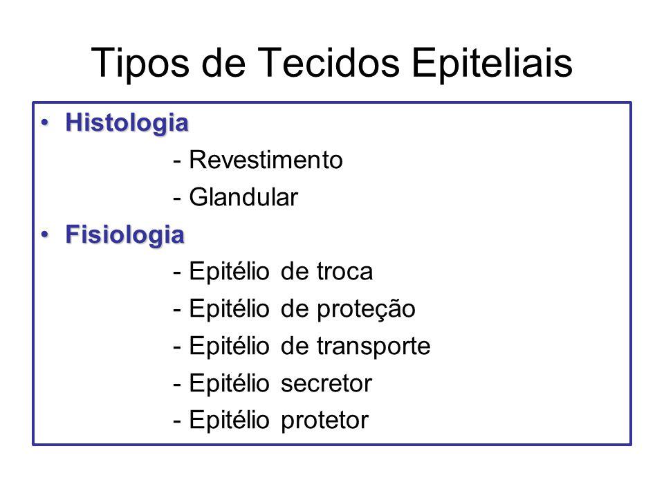 Tipos de Tecidos Epiteliais HistologiaHistologia - Revestimento - Glandular FisiologiaFisiologia - Epitélio de troca - Epitélio de proteção - Epitélio