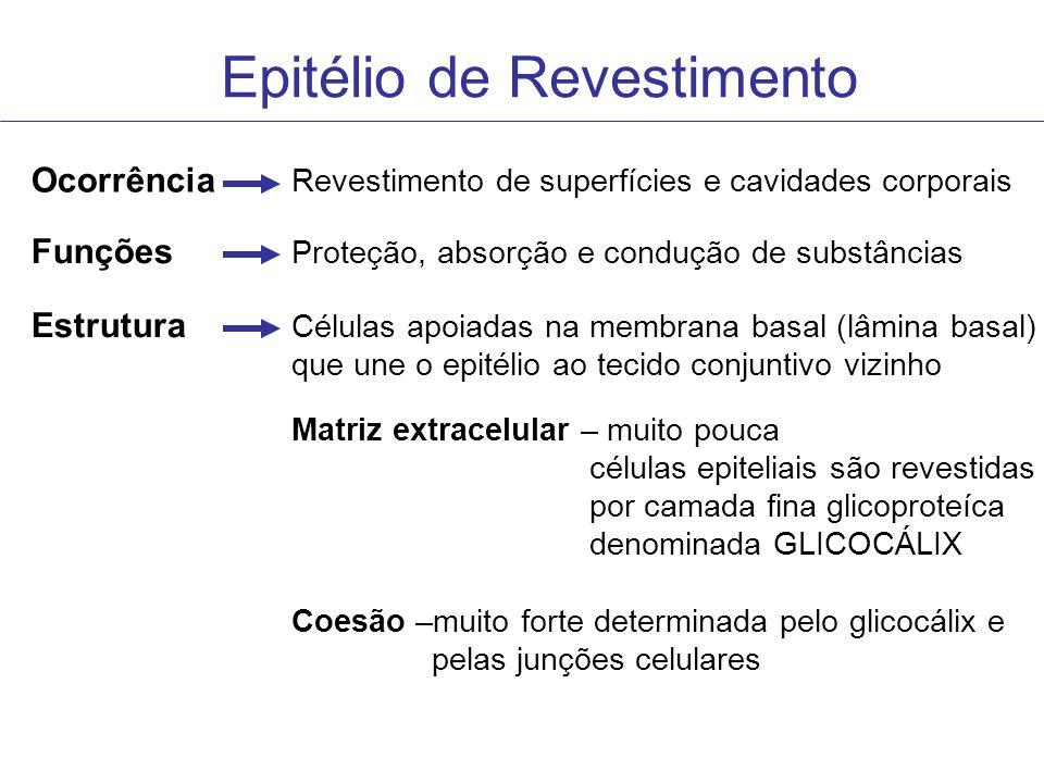 Epitélio de Revestimento Ocorrência Revestimento de superfícies e cavidades corporais Funções Proteção, absorção e condução de substâncias Estrutura C