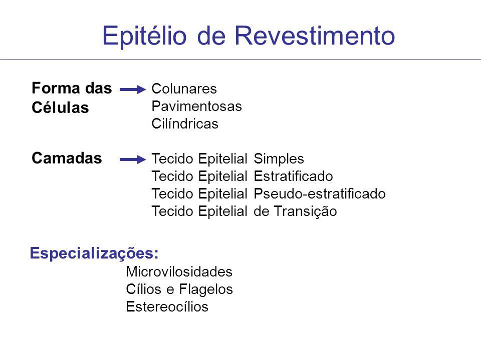 Epitélio de Revestimento Forma das Células Colunares Pavimentosas Cilíndricas Camadas Tecido Epitelial Simples Tecido Epitelial Estratificado Tecido E