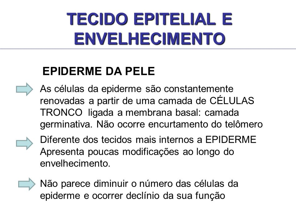 As células da epiderme são constantemente renovadas a partir de uma camada de CÉLULAS TRONCO ligada a membrana basal: camada germinativa. Não ocorre e