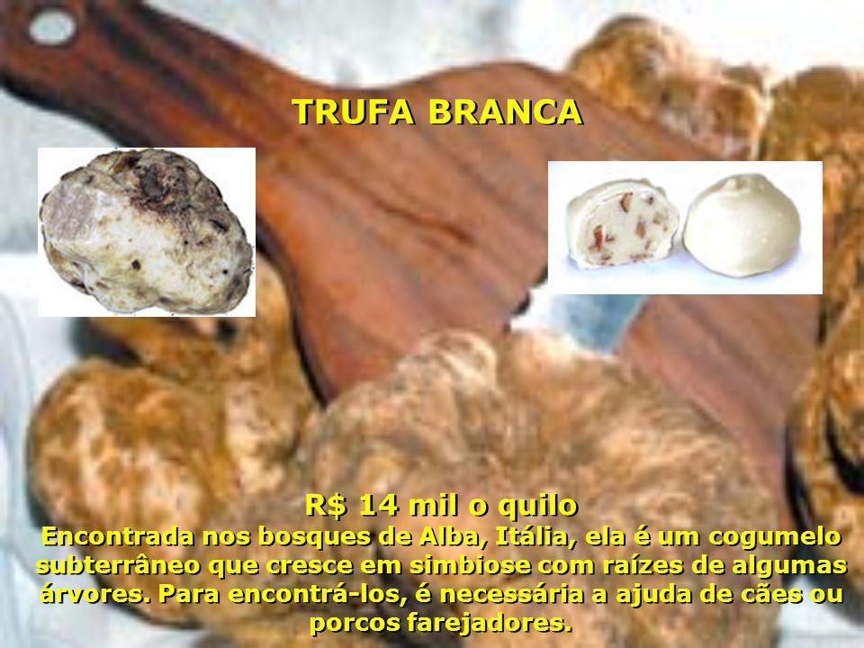 R$ 14 mil o quilo Encontrada nos bosques de Alba, Itália, ela é um cogumelo subterrâneo que cresce em simbiose com raízes de algumas árvores. Para enc