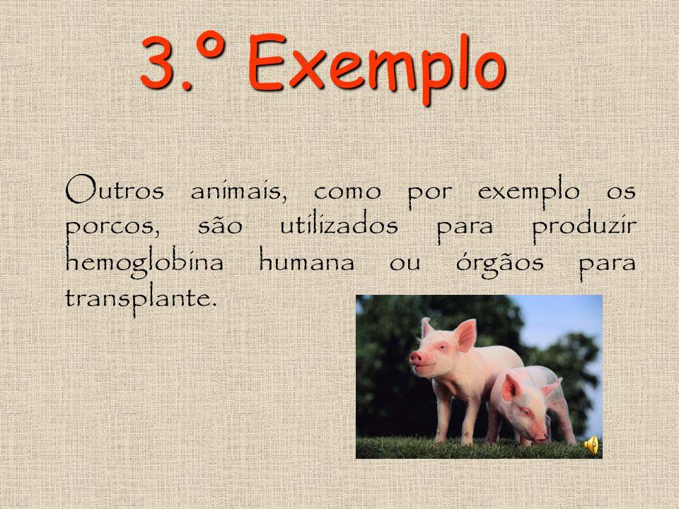 2.º Exemplo Já foi produzida a vaca que produz a lactoferritina, uma proteína do leite humano. Esta é uma proteína antibacteriana usada para tratar pa