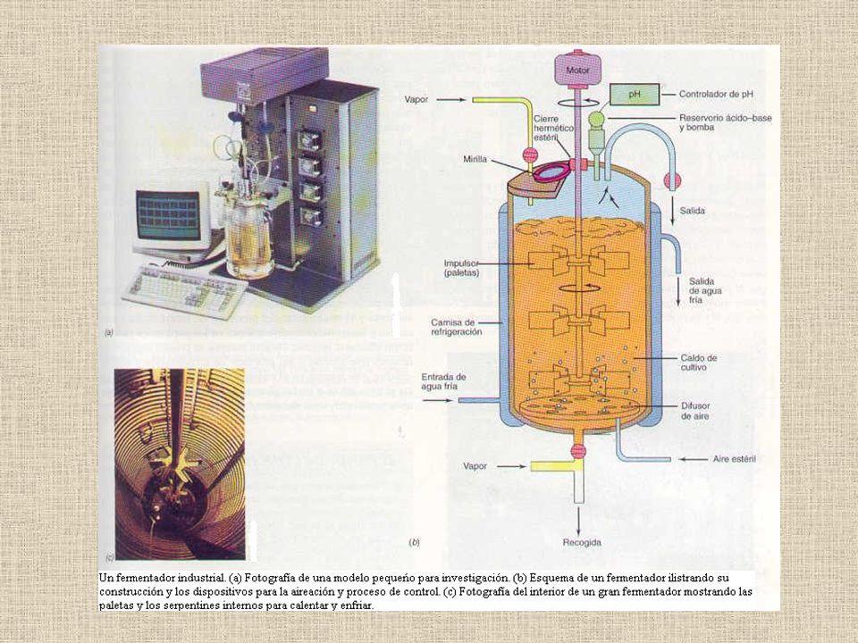 Este activador é também produzido pela biotecnologia através de bactérias cultivadas em fermentadores.